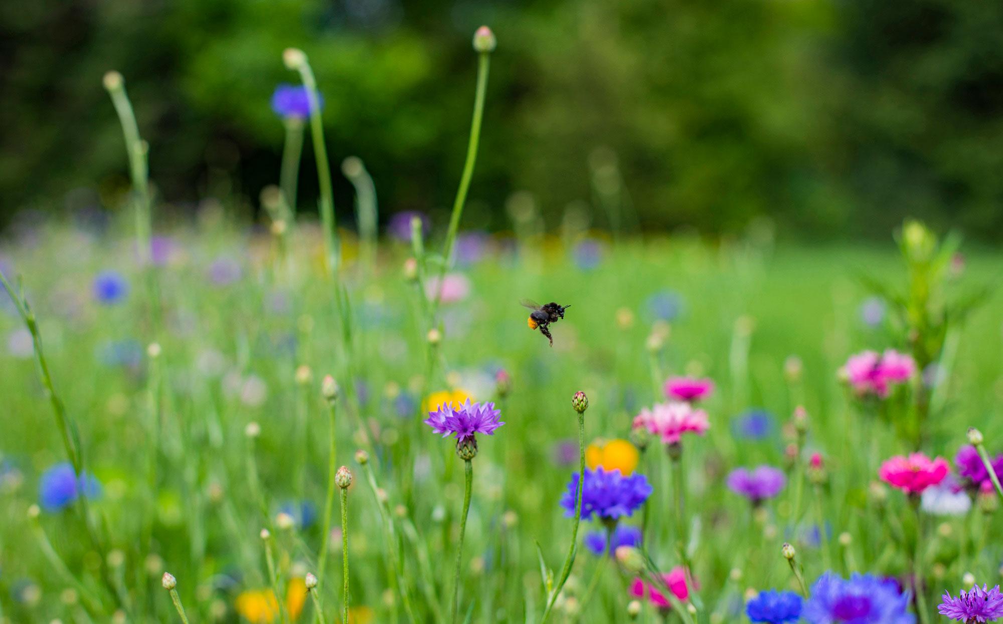 Einsame Biene